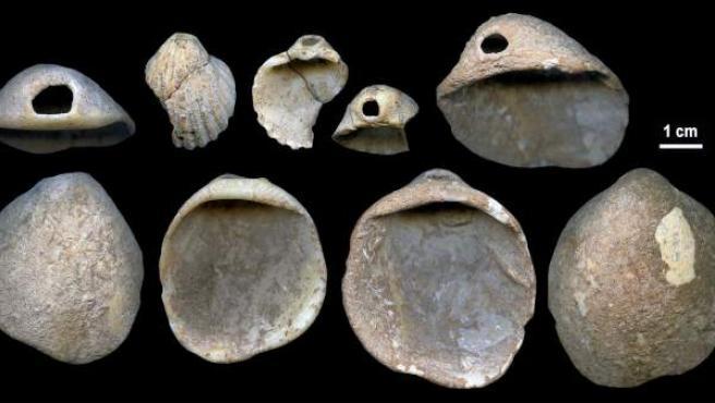 Imagen de las conchas analizadas