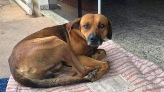 El animal permaneció durante cuatro meses en la puerta del hospital.