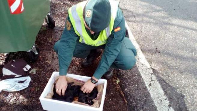 Una patrulla del Seprona de la Guardia Civil ha rescatado con vida a cinco cachorros recién nacidos abandonados en una cuneta al lado de un contenedor de basura en Pazos de Borbén (Pontevedra).
