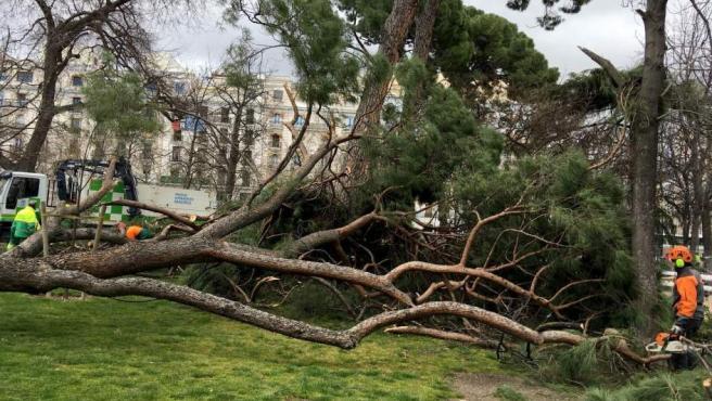 Vista del lugar en el que un niño de 4 años ha fallecido tras caerle un árbol encima en el parque del Retiro, en Madrid.