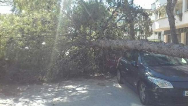 El viento ha tumbado árboles y ha complicado la movilidad, ya que se han tenido que efectuar cortes de ferrocarril.