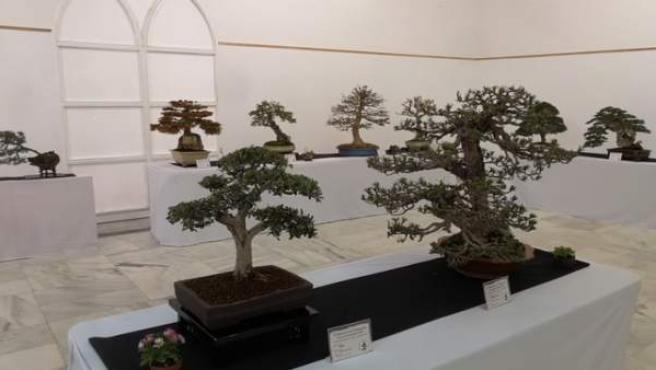 Algunos de los bonsáis que componen la muestra