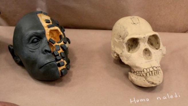 Reconstrucción científica de la cabeza del 'Homo naledi', descubierto en Sudáfrica.