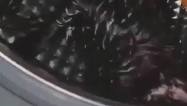 Captura del vídeo que muestra al gato maltratado dentro de la lavadora.