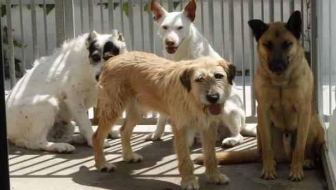 Perros abandonados dispuestos para adopción