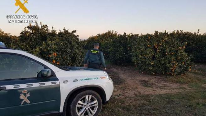 Guardia Civil detenido a los presuntos autores de un robo de kilos de naranjas