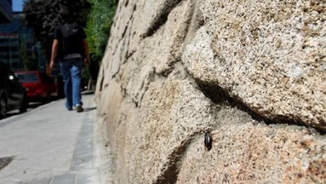 Las cucarachas son una de las plagas urbanas más habituales.