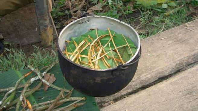 Preparación de la bebida alucinógena ayahuasca, también conocida como yagé.