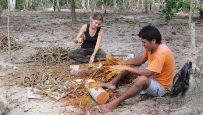 Preparación de ayahuasca en Perú.