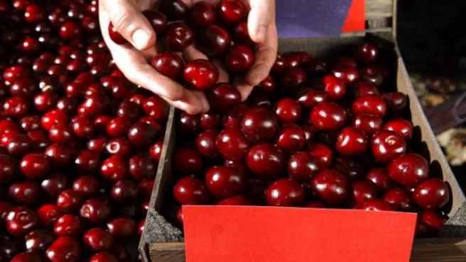 Cuál es la diferencia entre cerezas y picotas? (O por qué no son ...