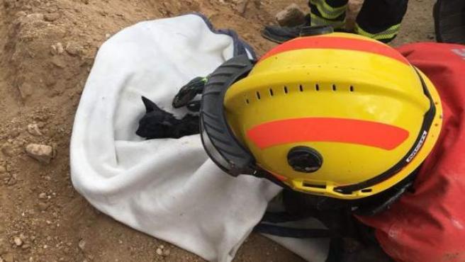 Gatito rescatado en Guardamar del Segura (Alicante)