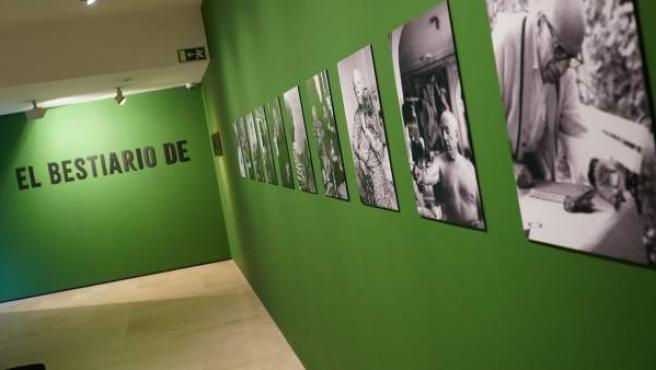 Exposición 'El bestiario de Picasso'.