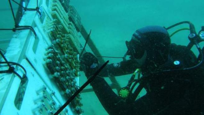 Científico arqueológico subacuático