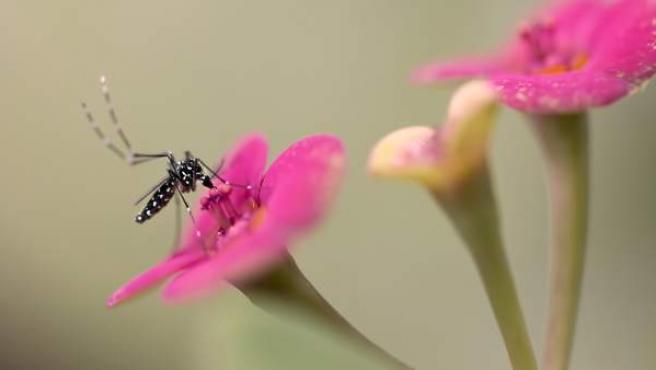 Insecto en una flor