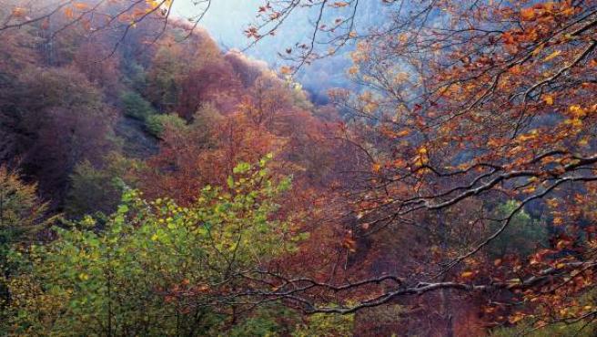 Bosque, árboles, otoño, paisaje, naturaleza.