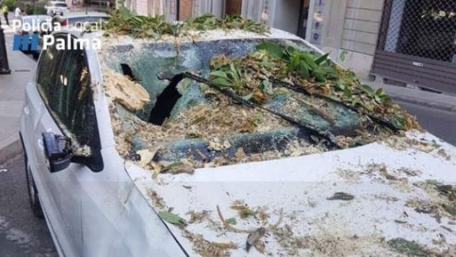 Una rama cae encima de un coche estacionado en Palma