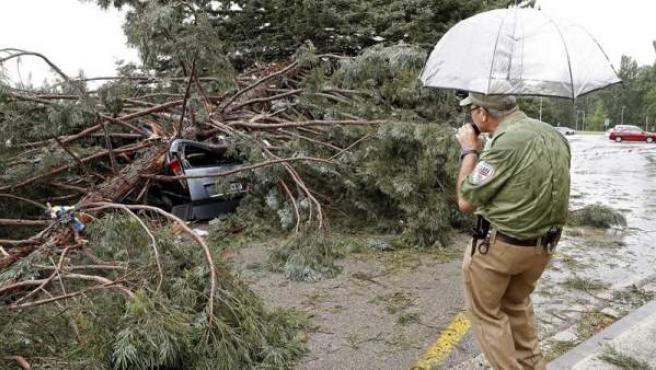 Un operario, junto a la rama de grandes dimensiones que hirió a al menos seis personas al desprenderse de su árbol, en un aparcamiento del campus de la Universidad de Navarra, en Pamplona.
