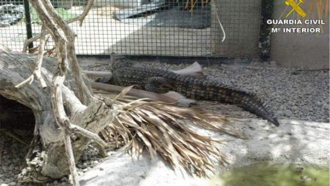 Criadero ilegal de reptiles en Alicante
