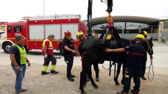 Bomberos y Zoosanitario se forman para mejorar el servicio con animales pesados
