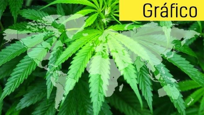 Planta de cannabis en todo su esplendor