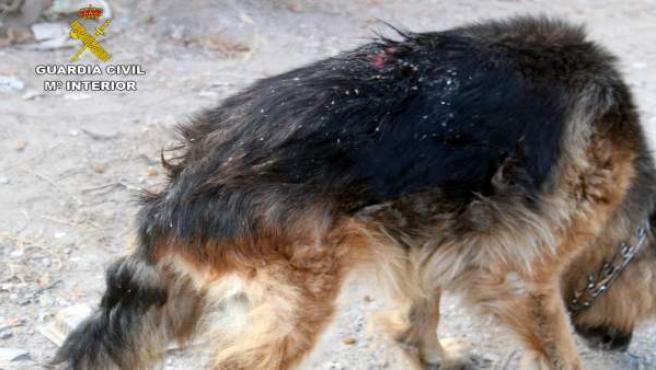Estado perro en caso de abandono animal en Águilas