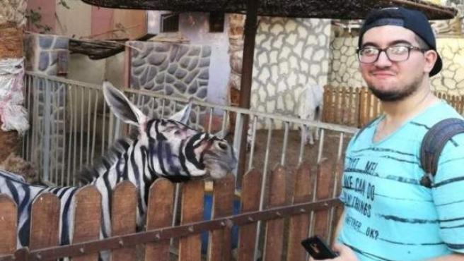 Foto de un visitante frente a uno de los burros que ha sido pintado para que parezca una cebra.