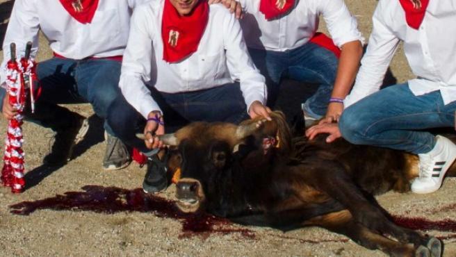 En el vídeo aparecen imágenes de una becerrada en San Rafael (Segovia) donde las crías son acosadas, banderilleadas y apuñaladas.