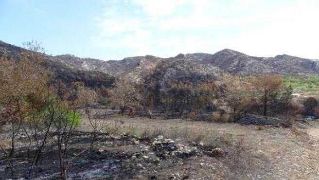 Zona afectada per l'incendi de Llutxent