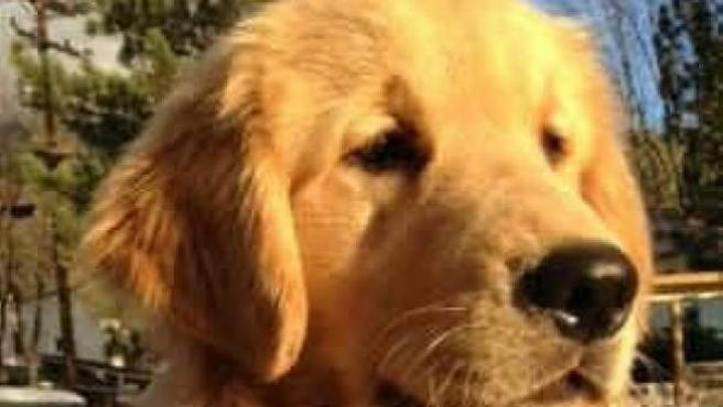 Max, el perro que es alcalde de Idyllwild, California.