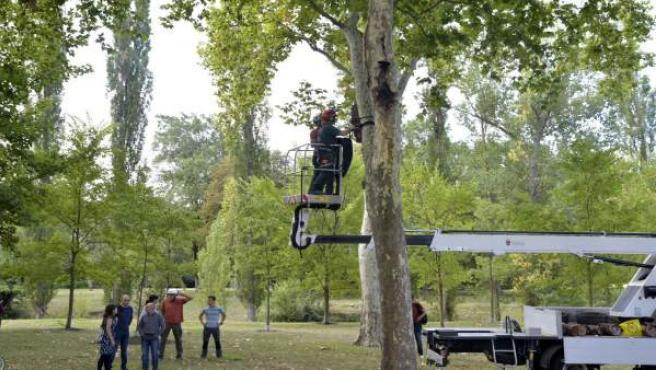 Colocación de refugios para murciélagos en Pamplona
