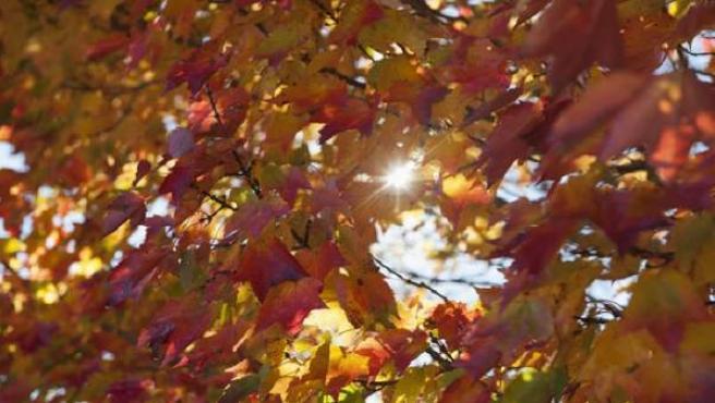 Hojas de los árboles en otoño.