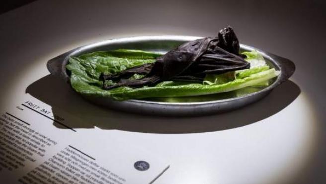 Un murciélago frugívoro es otra de las cosas que se exhibe en el Museo de Alimentos Asquerosos de Suecia.