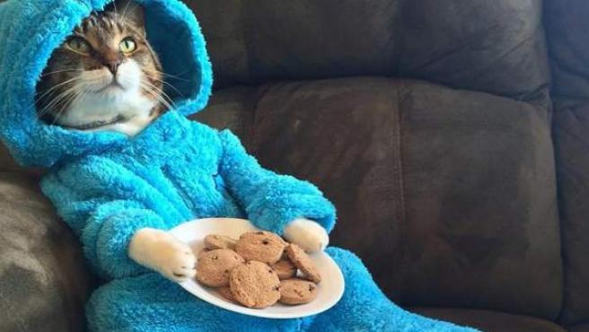 Un gatito con un pijama del Monstruo de las Galletas, de 'Barrio Sésamo'.