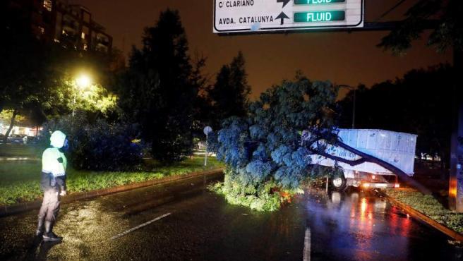 Retirada de un árbol en la avenida Blasco Ibañez en Valencia.