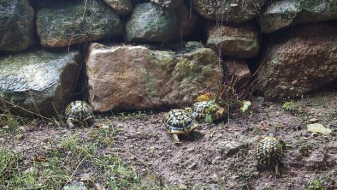 Liberación de tortugas en Bovera
