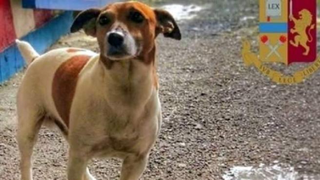 El perro policía Pocho, terror de la mafia italiana.