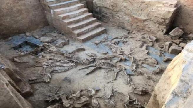 Esqueletos de animales sacrificados en el yacimiento tartésico de Guareña
