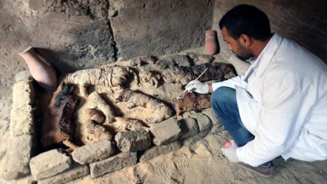 Un arqueólogo limpia momias de animales halladas en Saqqara, Egipto.