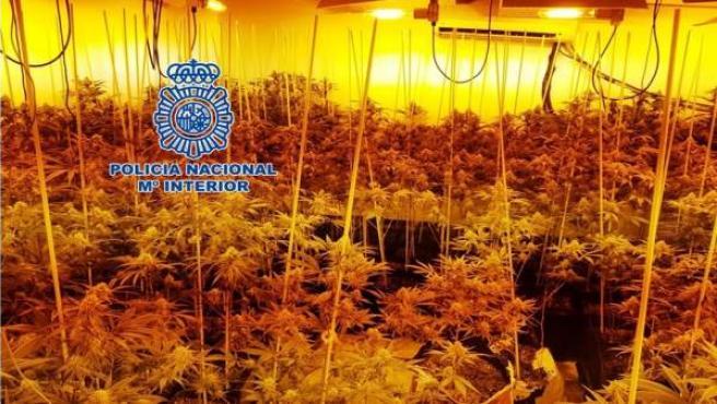 Plantación de marihuana desmantelada en una vivienda del Sector Sur