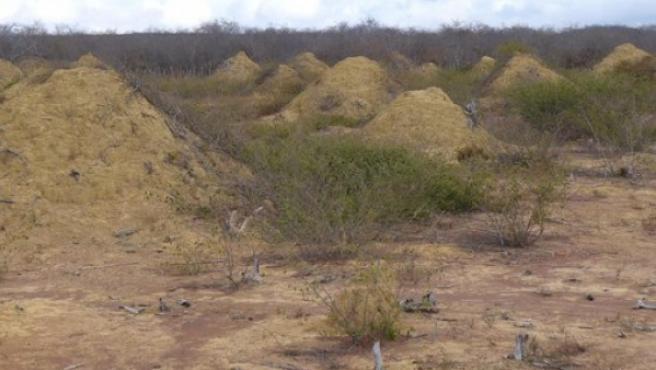 Imagen del conjunto de termiteros hallados al noreste de Brasil.