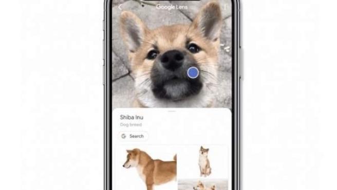 La tecnología de reconocimiento visual Google Lens reconoce animales, plantas y monumentos, entre otros.