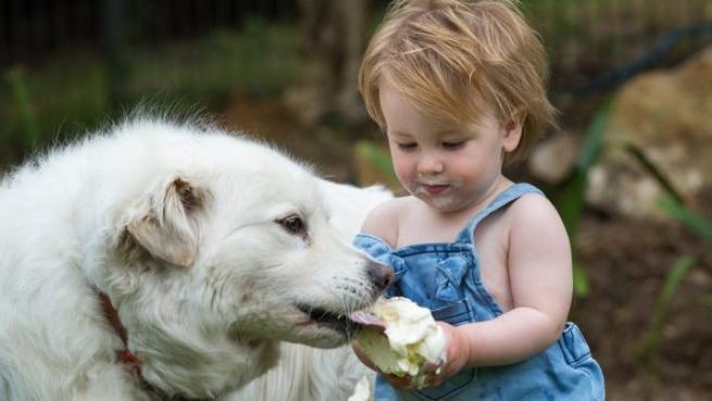 Una niña comparte su helado con su perro, en Adelaida (Australia).