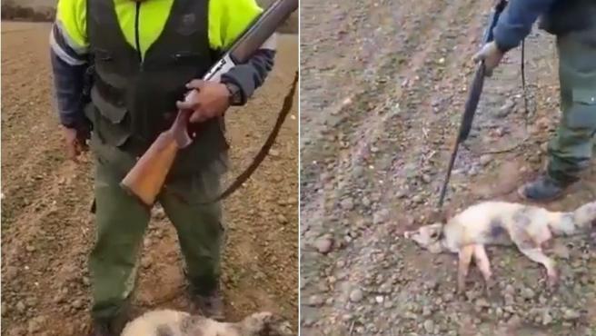 Un cazador pisotea y golpea hasta la muerte a un zorro herido.