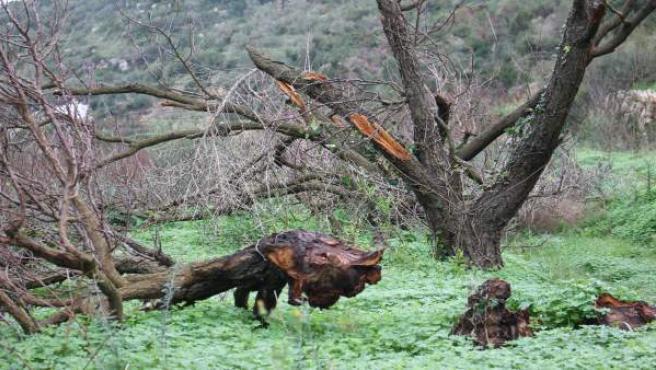 Daños causados en bosques de Baleares