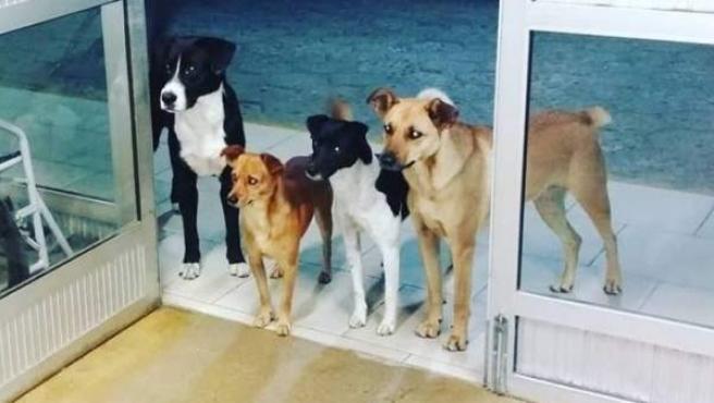 Cuatro perros esperando en la entrada de un hospital