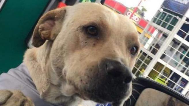 Randy, el perro rescatado por los dueños de la gasolinera que salvó su negocio.