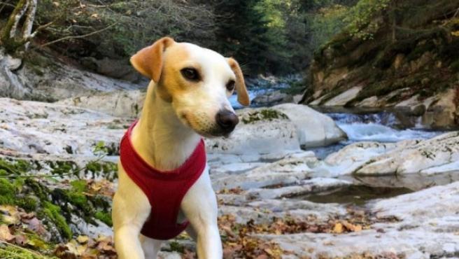 """Pipper, el protagonista de la nueva web para turismo """"dogfriendly"""" presentada en FITUR."""