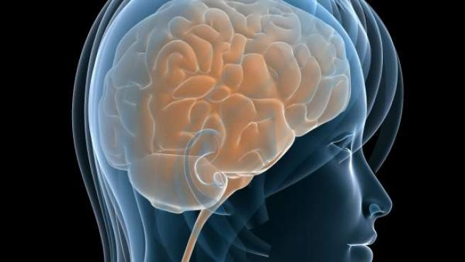 Recreación por ordenador de un cerebro humano.
