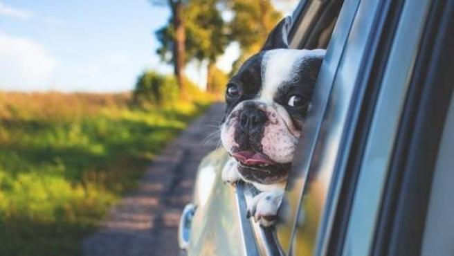 Las compañías aseguradoras pueden inhibirse si las mascotas van sueltas en el vehículo.