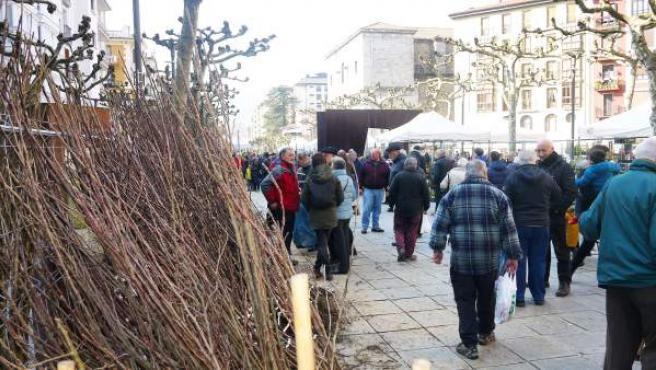 Feria del árbol en Tolosa